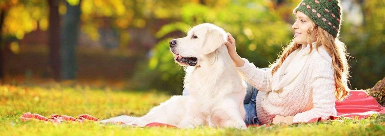 Votre relation avec votre chien est-elle harmonieuse ?