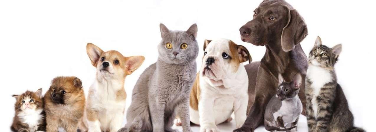 Pour une bonne cohabitation entre vos chiens et vos chats