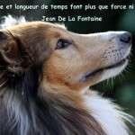 Animal_Emoi_Education_canine_Patience_et_longueur_de_temps_font_plus_que_force_ni_que_rage