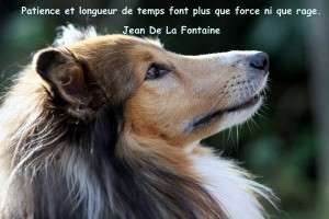 Animal_Emoi_Education_canine_Patience_et_longueur_de_temps_font_plus_que_force_ni_que_rage