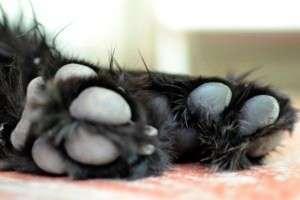 Animal_Emoi_Un_chien_bien_dans_ses_pattes