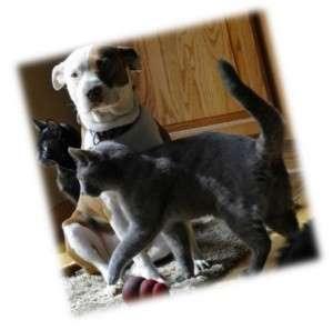 Animal_Emoi_chien_et_chats_QUI_SUIS-JE