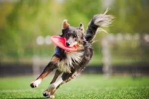 Animal_Emoi_chien_sportif