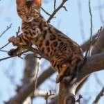ANIMAL_EMOI_Chat_dans_arbre