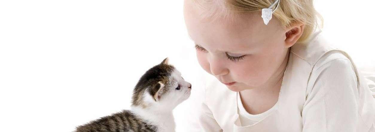 La cohabitation avec votre chat est-elle sereine ?