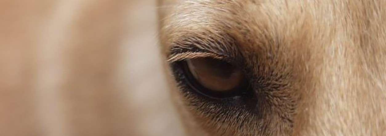 Comment changer votre regard sur votre chien ?