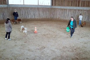 Animal-Emoi-stage-horse-and-dog-trail-lâcher