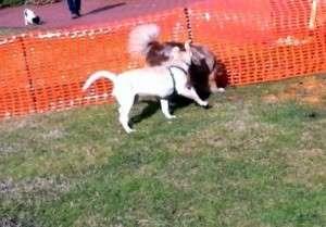Animal_Emoi_Séance_d_éducation_canine_collective_avec_lâchers_de_chiens_Jim_Max