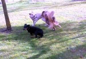 Animal_Emoi_séance_collective_éducation_canine_avec_lâchers_de_chiens_Max_Jim_Java