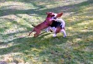 Animal_Emoi_séance_collective_d_éducation_canine_avec_lâchers_de_chiens_Bao_Joy