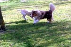 Animal_Emoi_séance_collective_d_éducation_canine_avec_lâchers_des_chiens_Jim_Bao