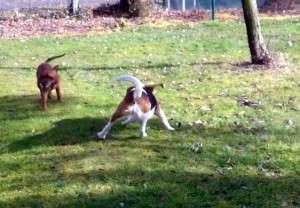 Animal_Emoi_séance_d_éducation_canine_collective_avec_lâchers_de_chiens_Bao_Joy